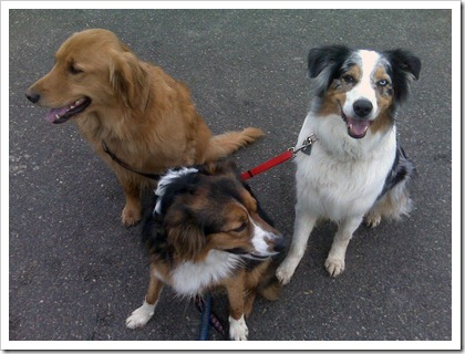 just3dogs